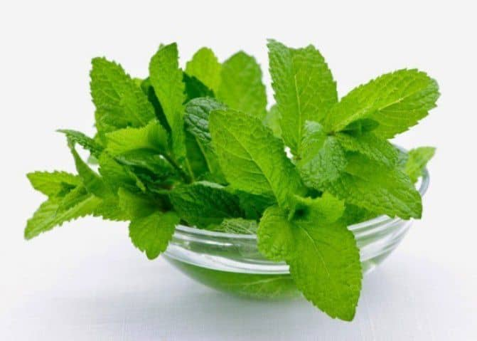 Secret Benefits Of Mint - Plattershare - Recipes, Food Stories And Food Enthusiasts