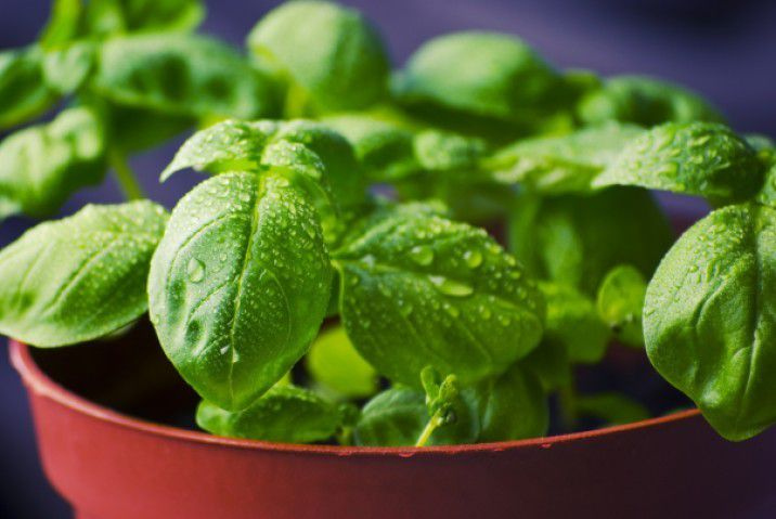 Grow Your Own Herbs - Plattershare - Recipes, Food Stories And Food Enthusiasts