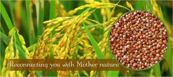 """Its Me The Millet ! €"""" The Miracle Grains - Plattershare - Recipes, Food Stories And Food Enthusiasts"""