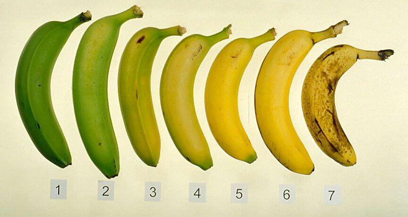 Banana Nutrition Facts, Banana Recipes, Banana Ripening And Much More... - Plattershare - Recipes, Food Stories And Food Enthusiasts