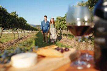 Single Vineyard Wines Variety Shiraz In Barossa Valley - Plattershare - Recipes, Food Stories And Food Enthusiasts