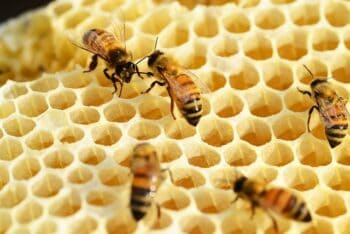 Health &Amp; Well-Being: Raw Honeycomb Nutrition Facts And Benefits - Plattershare - Recipes, Food Stories And Food Enthusiasts